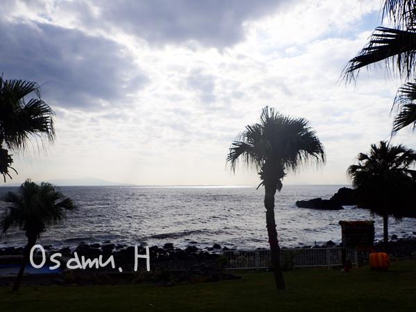20161118伊豆 ダイビング 伊豆海洋公園