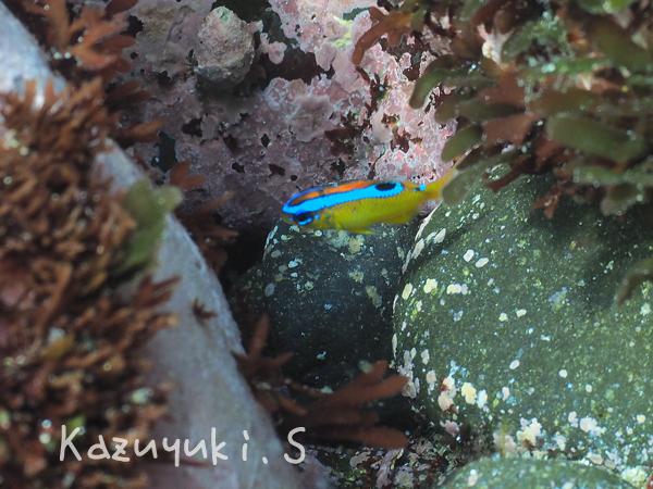 20170707伊豆 ダイビング 伊豆海洋公園5