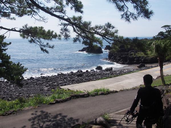 20170809伊豆 ダイビング 伊豆海洋公園