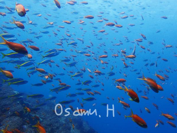 20170909伊豆 ダイビング 伊豆海洋公園7