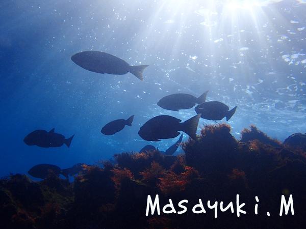 20171223伊豆 ダイビング 伊豆海洋公園