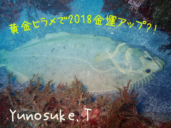 20171230伊豆 ダイビング 伊豆海洋公園 黄金ヒラメ