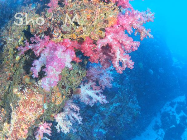 20180101伊豆 ダイビング 伊豆海洋公園6