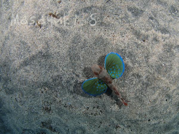 20180104伊豆 ダイビング 伊豆海洋公園5