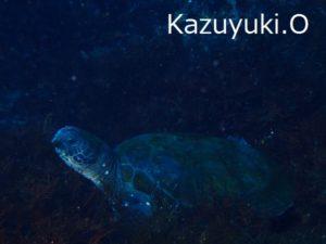 20180224伊豆 ダイビング 伊豆海洋公園