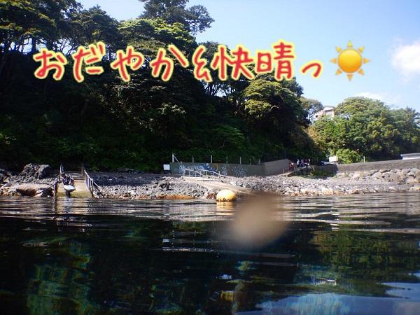 20180429伊豆 ダイビング 伊豆海洋公園