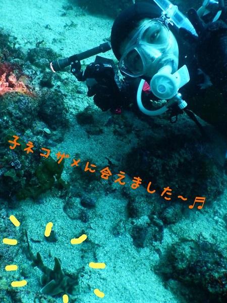20180429伊豆 ダイビング 伊豆海洋公園2