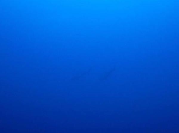 20180922伊豆 ダイビング 伊豆海洋公園 ダイビングスクール