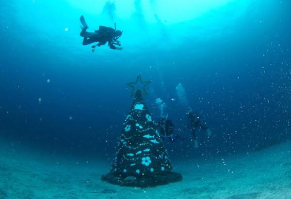 20181203伊豆 ダイビング 伊豆海洋公園 ダイビングスクール