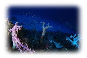 伊豆海洋公園 5の根